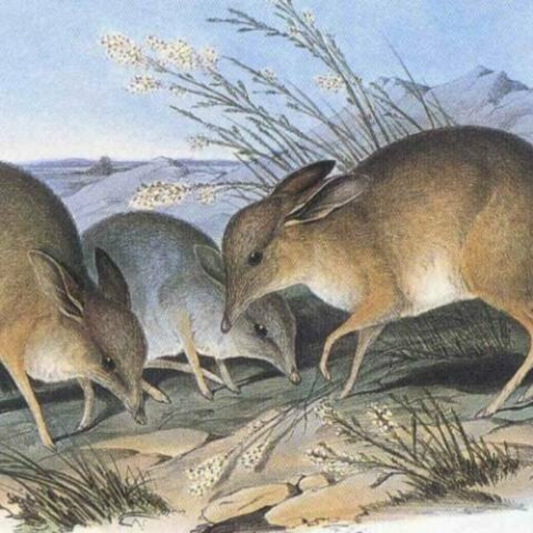 New types extinction target proposed for international nature rescue strategy