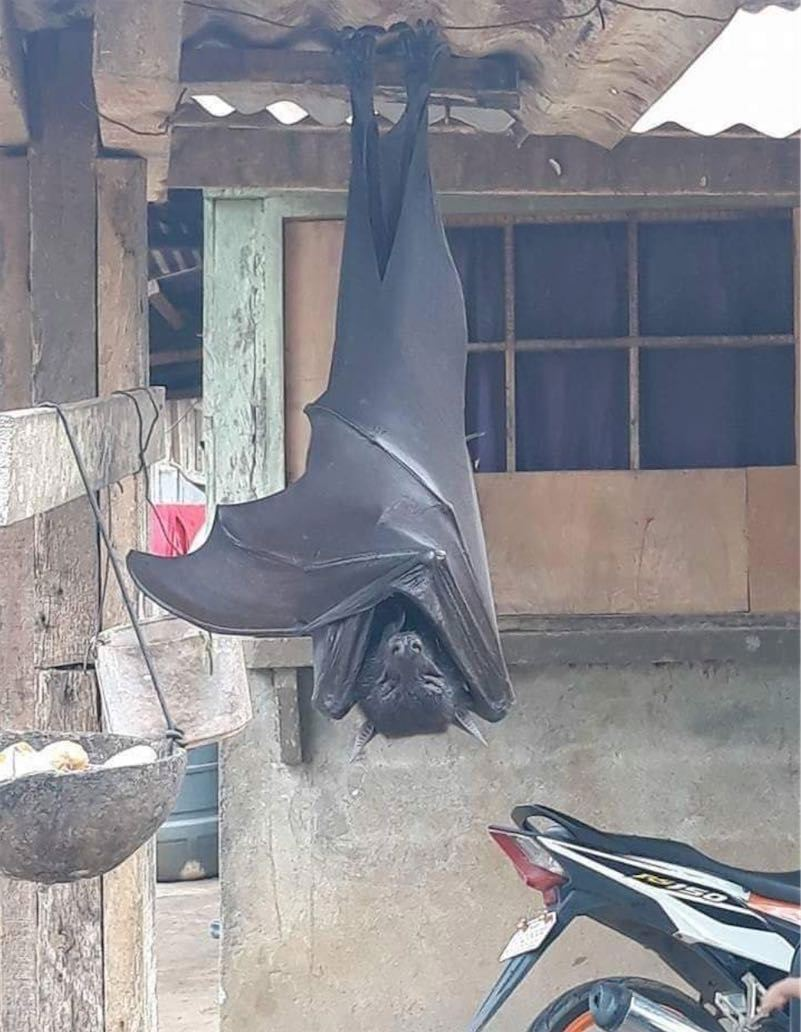 Image of a freaky human-sized bat