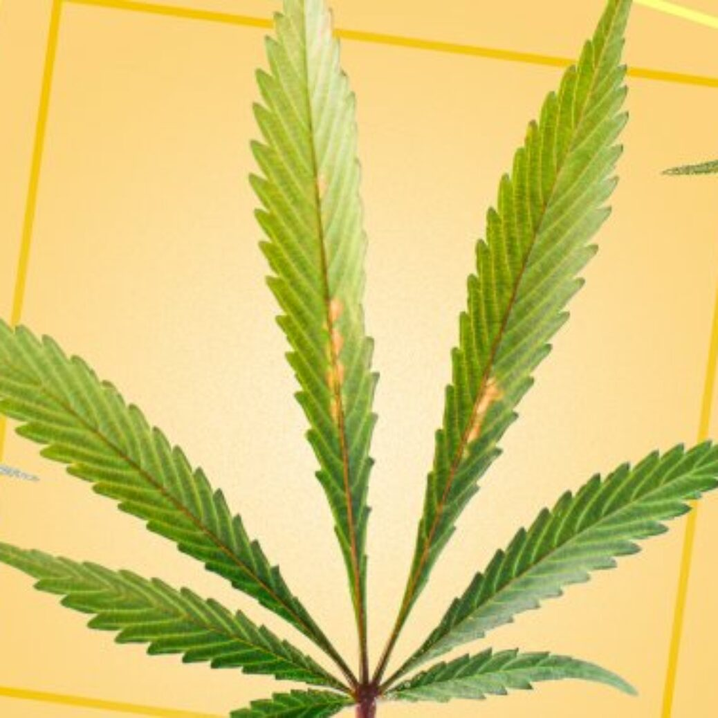 Hemp Mythbusters: 5 Misconceptions About The Plant That Need To Be Debunked