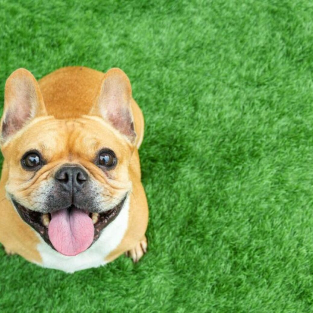 A Growing Group Of CBD Customers Isn't Even Human. Its Members Value CBDs' Anti-Pain Benefits– With A Definite 'Woof!'